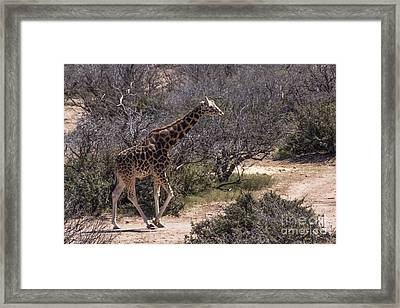 Out Of Africa Giraffe Framed Print by Janice Rae Pariza