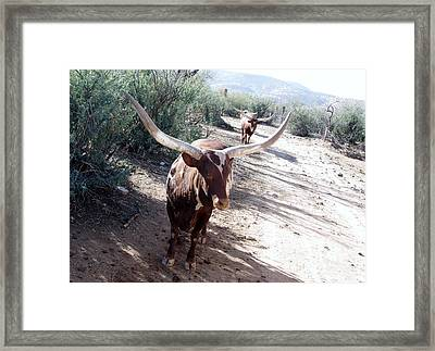 Out Of Africa  Long Horns Framed Print
