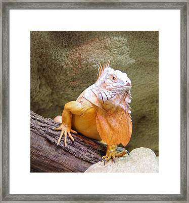 Out Of Africa Orange Lizard 1 Framed Print