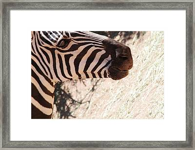 Out Of Africa Framed Print by Paulina Roybal