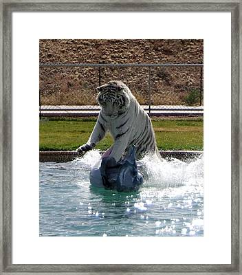 Out Of Africa Tiger Splash 1 Framed Print