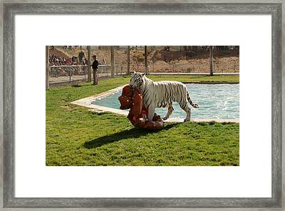 Out Of Africa Tiger Splash 2 Framed Print