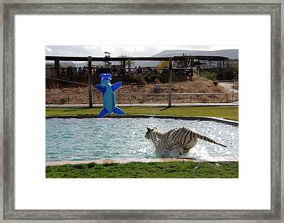 Out Of Africa Tiger Splash 3 Framed Print