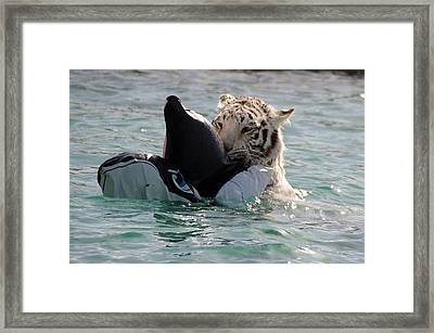 Out Of Africa Tiger Splash 4 Framed Print