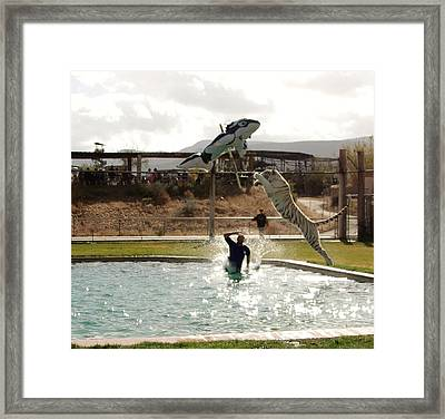 Out Of Africa  Tiger Splash 6 Framed Print