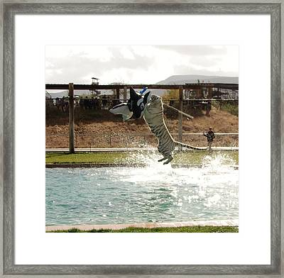Out Of Africa Tiger Splash 7 Framed Print