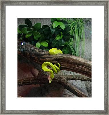 Out Of Africa Tree Snake Framed Print