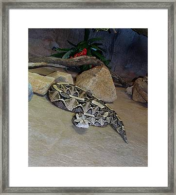 Out Of Africa Viper 2 Framed Print