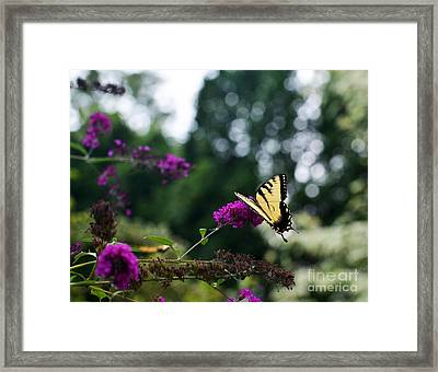 Out Of Bounds 3 Framed Print by Judy Wolinsky