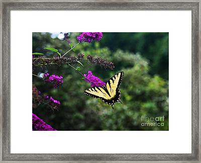 Out Of Bounds Framed Print by Judy Wolinsky