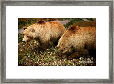 Out Of Hibernation Framed Print