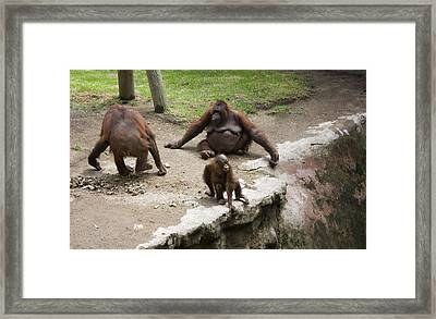 Framed Print featuring the photograph Out Of Reach by Lynn Palmer