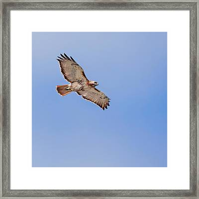 Out Of The Blue Square Framed Print by Bill Wakeley