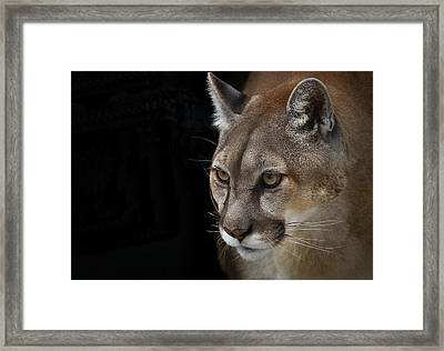 From Out Of The Darkness Framed Print