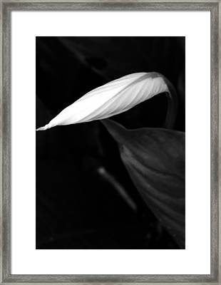 Out Of The Darkness Framed Print by Tara Miller