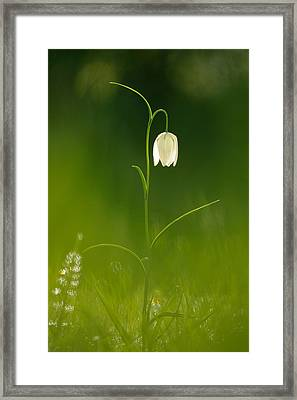 Out Of The Green Framed Print