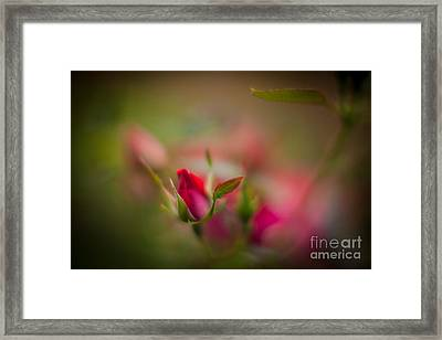 Out Of The Mist Framed Print by Mike Reid