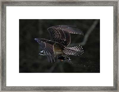 Out Of The Shadows Framed Print by Mike Farslow
