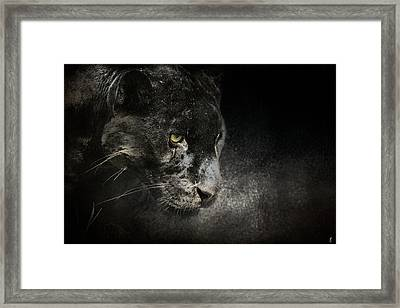 Out Of The Shadows - Wildlife - Black Leopard Framed Print by Jai Johnson