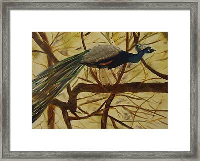 Out On A Limb Framed Print by Betty Pimm