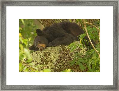 Out On A Limb Framed Print by Doug McPherson