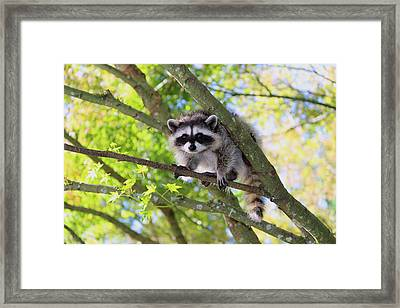 Out On A Limb Framed Print by Kym Backland