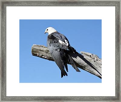 Out On A Limb Framed Print by Paulette Thomas
