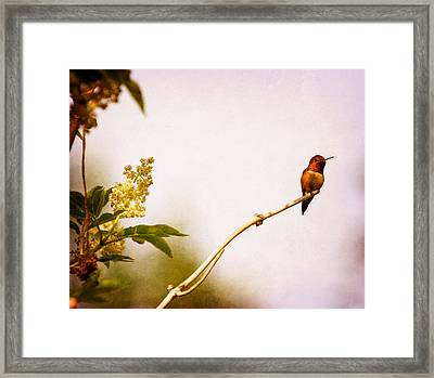 Out On A Limb Framed Print by Peggy Collins