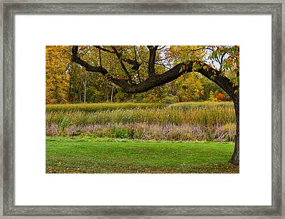 Out On A Limb Framed Print by Rachel Cohen
