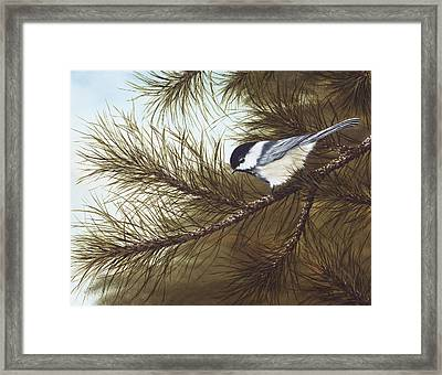 Out On A Limb Framed Print by Rick Bainbridge