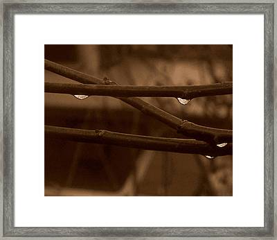 Framed Print featuring the photograph Out On A Limb by Suzy Piatt
