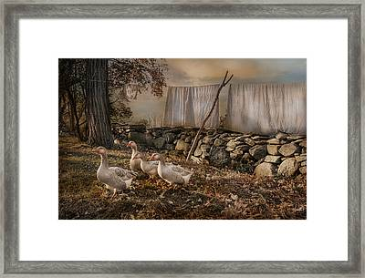 Out To Dry Framed Print by Robin-Lee Vieira