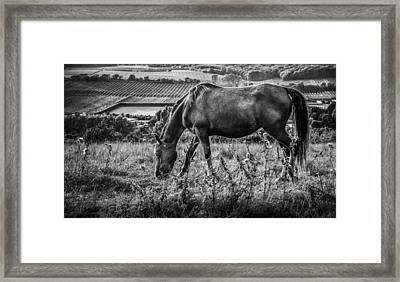 Out To Grass Framed Print by Ian Hufton