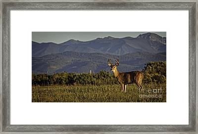 Out West Framed Print