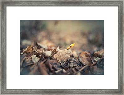 Out With The Old - In With The New Framed Print