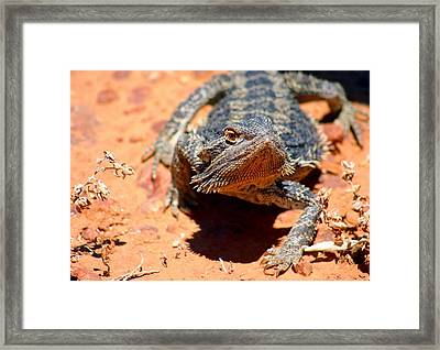 Framed Print featuring the photograph Outback Lizard 2 by Henry Kowalski