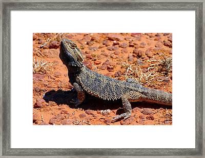 Framed Print featuring the photograph Outback Lizard by Henry Kowalski