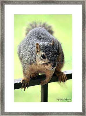 Outdoor Life - Squirrel 1 Framed Print by Angela Rogers