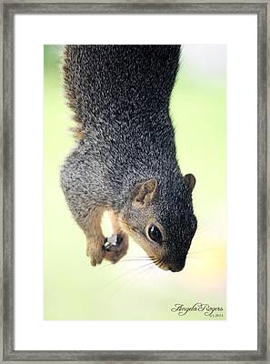 Outdoor Life - Squirrel 2 Framed Print by Angela Rogers