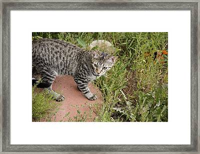 Outdoor Playtime Framed Print by Mike Schmidt