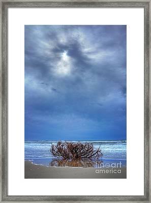 Outer Banks - Driftwood Bush On Beach In Surf I Framed Print by Dan Carmichael