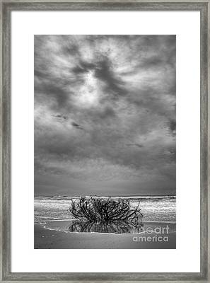 Outer Banks - Driftwood Bush On Beach In Surf IIi Framed Print by Dan Carmichael