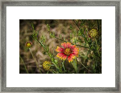 Framed Print featuring the photograph Outer Banks Wildflower by Bradley Clay
