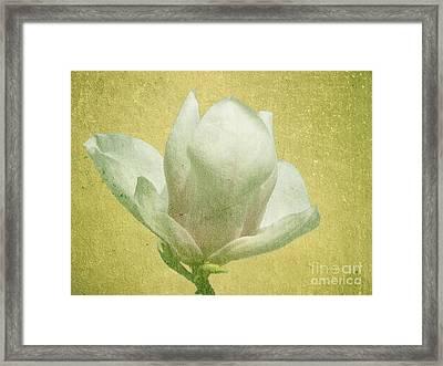 Outer Magnolia Framed Print