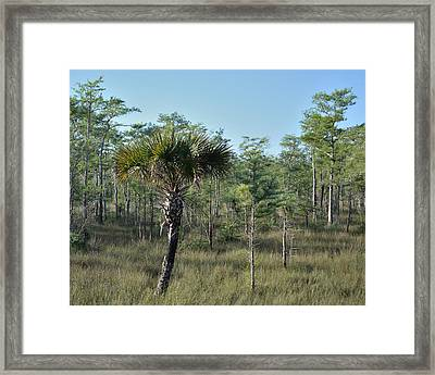 Outnumbered Framed Print by Alan Seelye-James