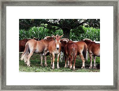 Framed Print featuring the photograph Outstanding In Your Field by Polly Peacock