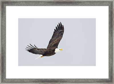 Outstretched Framed Print by John Blumenkamp