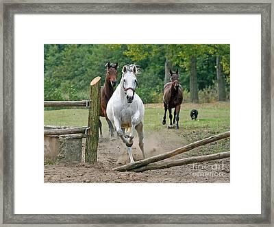 Over The Fence Framed Print by Angel  Tarantella