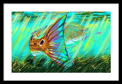 Sailfish Framed Prints