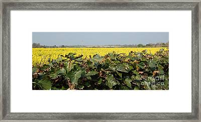 Framed Print featuring the photograph Over The Hedge by Linda Prewer